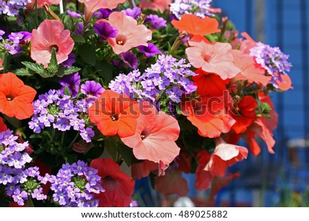 A mix of flowers featuring orange petunias.