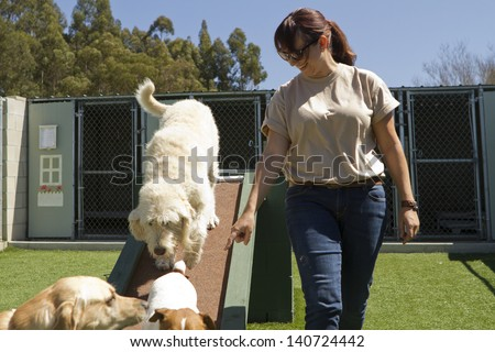 A mixed-breed poodle at a pet boarding facility. - stock photo