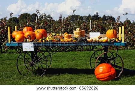 a mixture of autumn gourds - stock photo