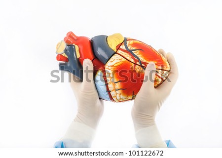 a model of a human heart hold by female hands in sterile gloves - stock photo