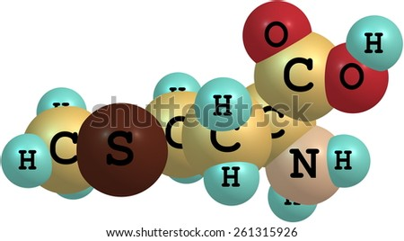 A model of a molecule of methionine, an essential amino acid. Amino acids are the building blocks of proteins and have many functions in metabolism - stock photo