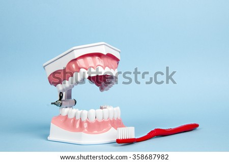 a model of the teeth - dentures - stock photo