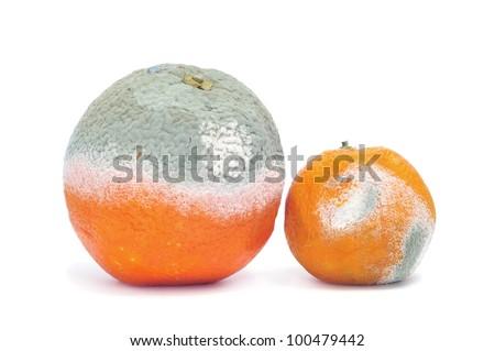 a moldy orange and a moldy mandarine on a white background - stock photo