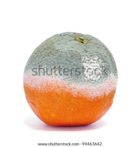 a moldy orange on a white background - stock photo