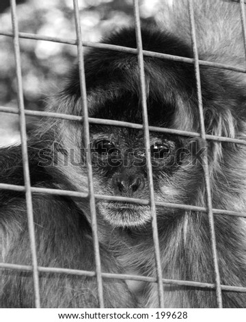 A monkey behind bars...