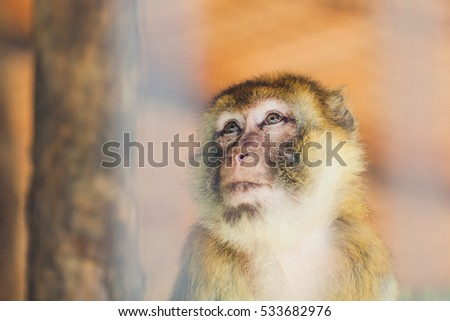 A Monkey Behind the Bars is Looking Sad and Lonely, Picture of A Monkey in theZoo