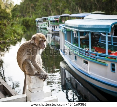 A monkey contemplates the tourist boats on the sekonyer river, , Borneo, Indonesia - stock photo
