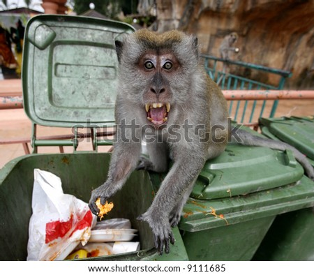 A monkey gets angry and shocked. - stock photo