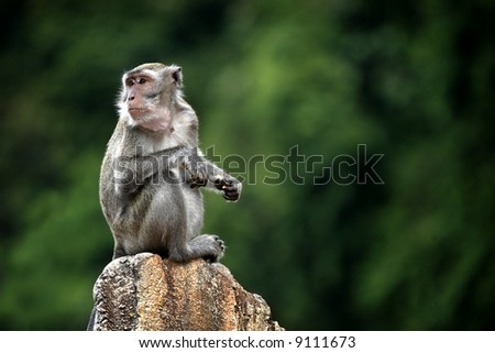 A monkey with a green background.