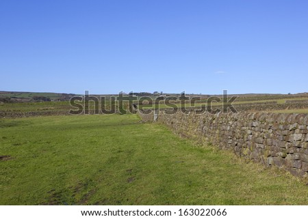a moorland landscape with dry stone walls and rugged grazing meadows on the north york moors under a blue sky - stock photo