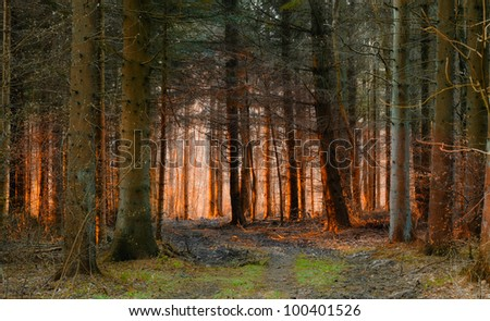 A morning photo of autumn forest - stock photo