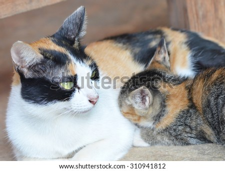 A Mother Cat With KittensThis Photo Taken In Natural Light To The Color On