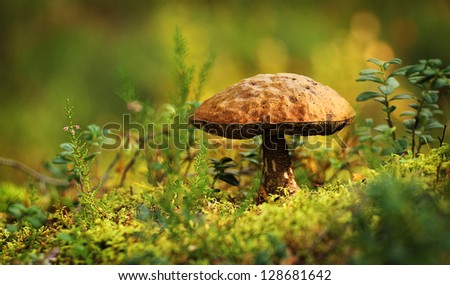 A mushroom in the forrest - stock photo