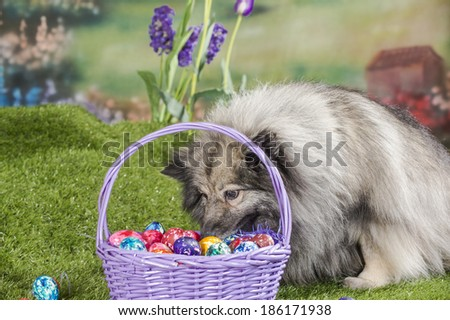 A Mutt Dog Sinks Her Nose Into A Purple Basket Of Colorful Easter Eggs