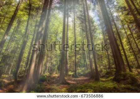 A mystical forest with magical sunlight