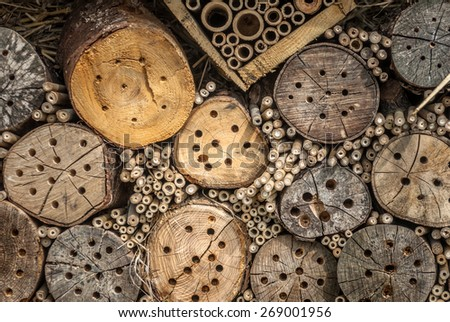 A natural housing for many species of insect from bees to bugs. - stock photo