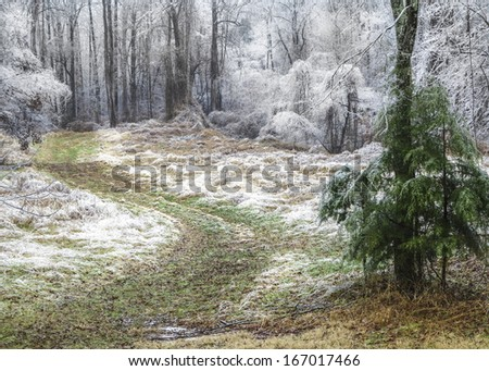 A nature photograph of a private, secluded country road in rural Tennessee after an ice storm.  The winding road disappears into the woods with trees white with ice accumulated from freezing rain.