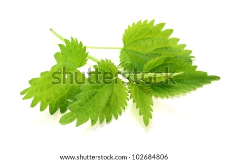 a nettle stems on a bright background - stock photo