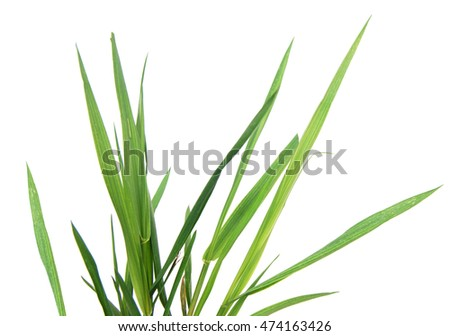 A new family grass land isolated white