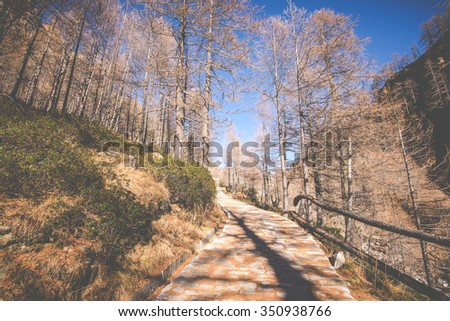 a nice place for relaxed holidays in mountain - the road through the forest