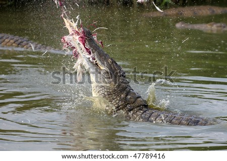 A Nile Crocodile breaching the water to catch prey - stock photo