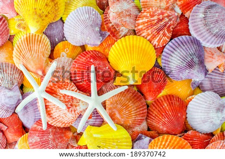 A number of Colorful Scallop seashell and sea star or starfish background - stock photo