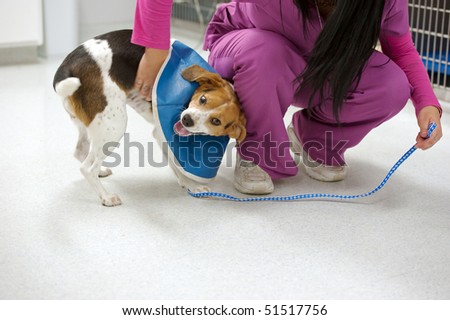 a nurse calms a playful dog in recuperation - stock photo