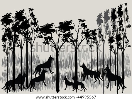 a pack of dingo's - stock photo