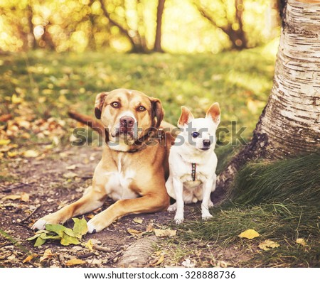 a pair of dogs sitting together in a park toned with a retro vintage instagram filter effect app or action - stock photo