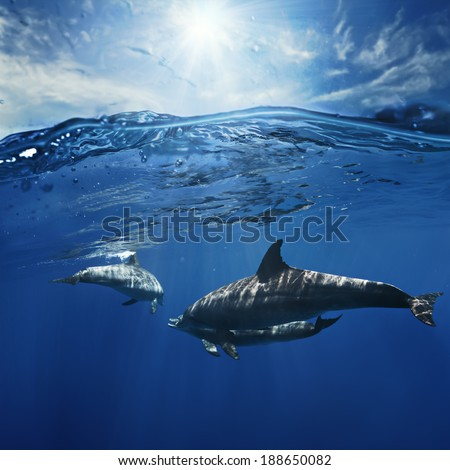 a pair of dolphins playing in sunrays under water surface - stock photo