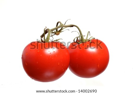 A pair of fresh vine ripened tomatoes - stock photo
