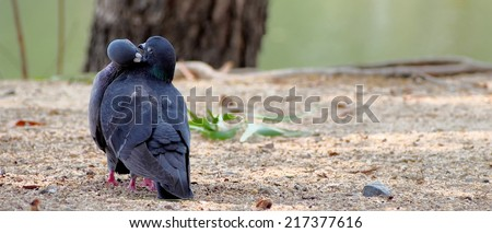 A pair of kissing doves in the park with sand - stock photo