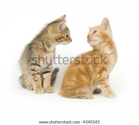 A pair of kittens stare at each other on a white background - stock photo