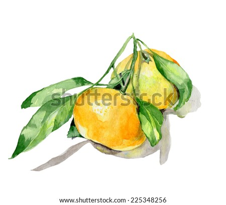 A pair of mandarin oranges with leaves, painted in watercolor