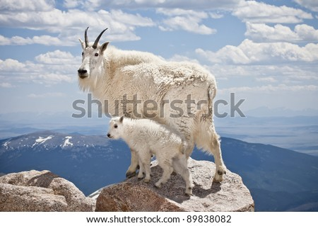 A pair of mountain goats stand proudly, high in the rocky mountains - stock photo