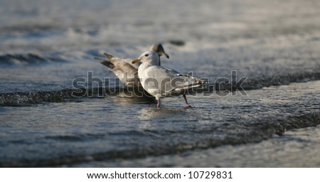 A Pair of Seabirds on the Shoreline