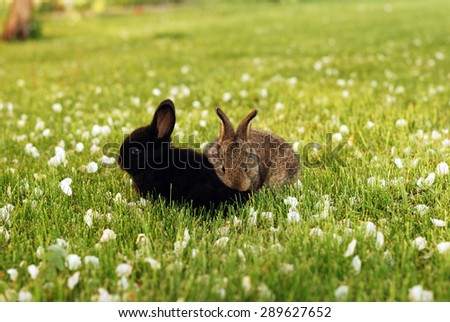 A pair of small rabbits on green grass - stock photo