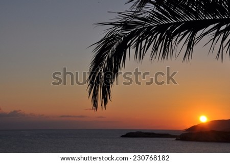 A palm branch and sunrise - stock photo