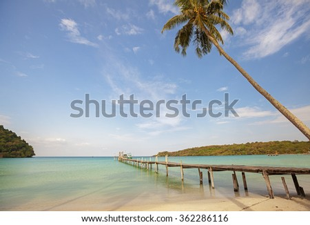a palm covering the pier