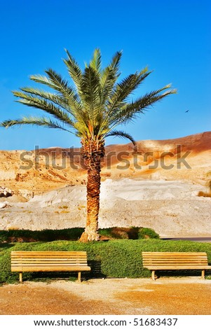 A palm tree and benches on quay near a medical beach on the Dead Sea - stock photo
