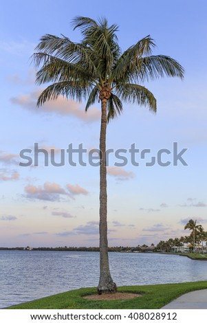 A palm tree at sunset in Florida with copy space.