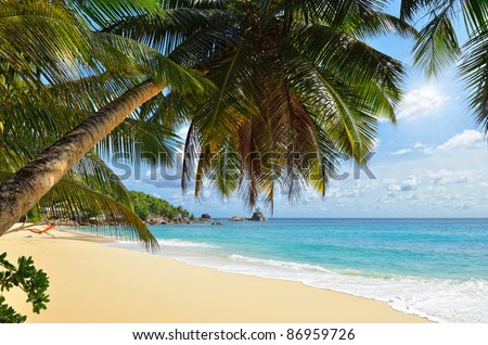 A palm tree bends over an empty sandy beach on Seychelles islands. Mahe, Anse Soleil - stock photo