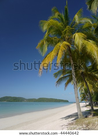 A palm tree on a tropical beach