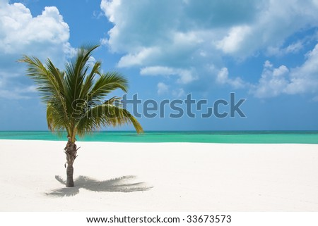 A Palm tree on the Mexican tropical beach