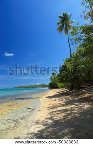 A palm tree rises over a calm turquoise bay at Seven Seas Beach near Fajardo, Puerto Rico