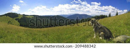 A panoramic view over the mountain landscape with a dog sitting in a grass in the foreground. Carpathians, Ukraine. Panorama. - stock photo