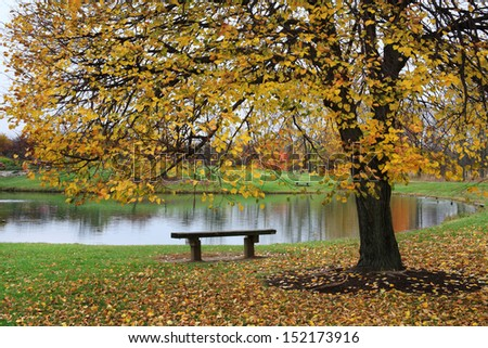 A Park Bench Next To A Pond And A Colorful Tree On A Rainy Day In Autumn, Southwestern Ohio, USA - stock photo