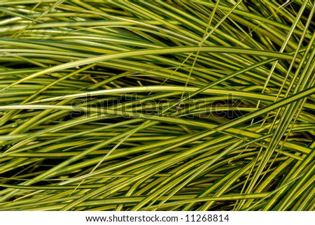 A patch of grass with yellow stripes on an early morning - stock photo