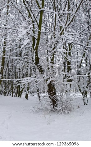 A path between trees covered with snow - stock photo