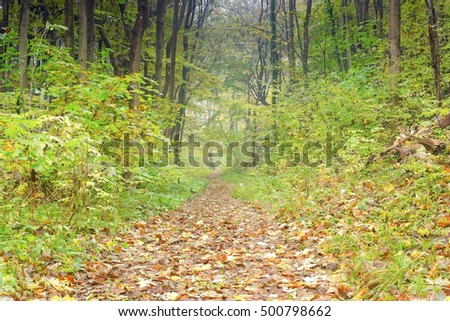 A path in a forest